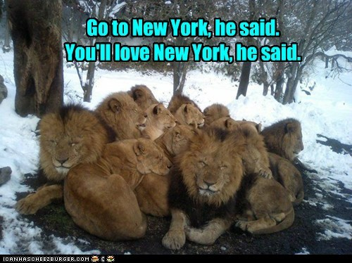 cold,he said,huddled,lions,love,new york,sleeping,snow