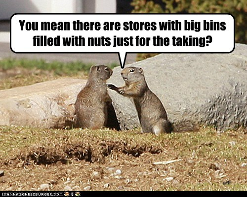 atm card,bins,explaining,gophers,heaven,nuts,prarie dogs,stores
