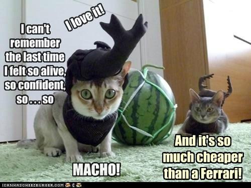 captions,Cats,horn,mid-life crisis,phallic,wtf