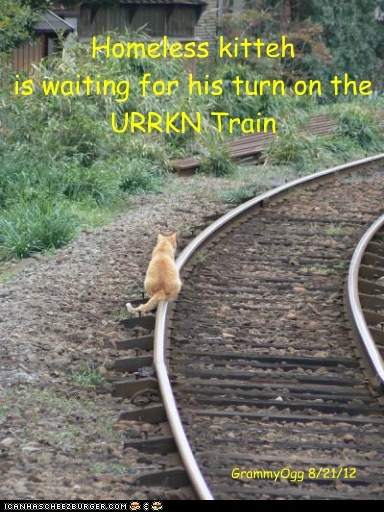 Homeless kitteh is waiting for his turn on the URRKN Train GrammyOgg 8/21/12