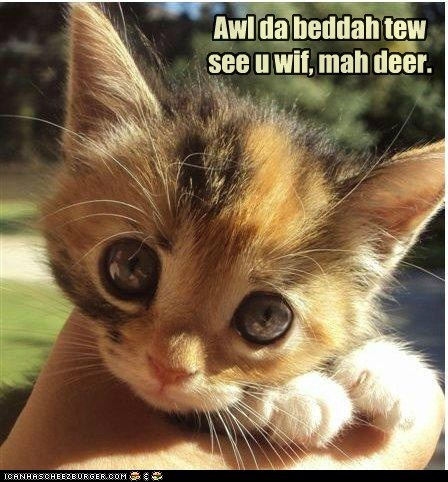 captions Cats eyes head kitten Little Red Riding Hood what big eyes you have - 6528518400