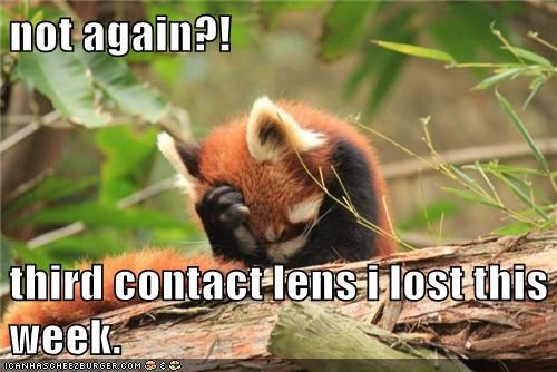 angry,contact lenses,lost,not again,red panda