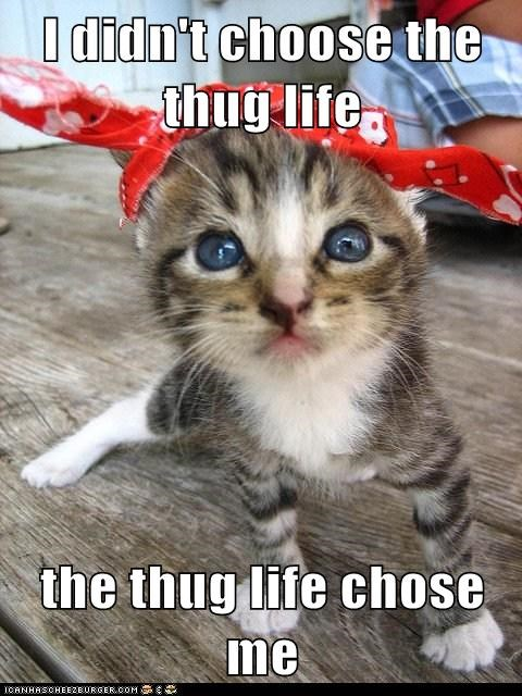 captions,Cats,kitten,thug,thug life,tupac
