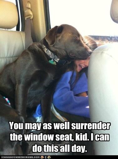 captions car kid lab little girl nap attack sleeping surrender - 6528841984
