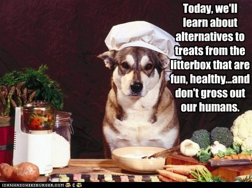 Today, we'll learn about alternatives to treats from the litterbox that are fun, healthy...and don't gross out our humans.