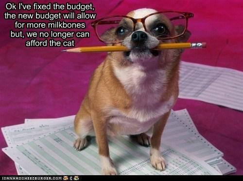 cat chihuahua glasses money pencil - 6528928768
