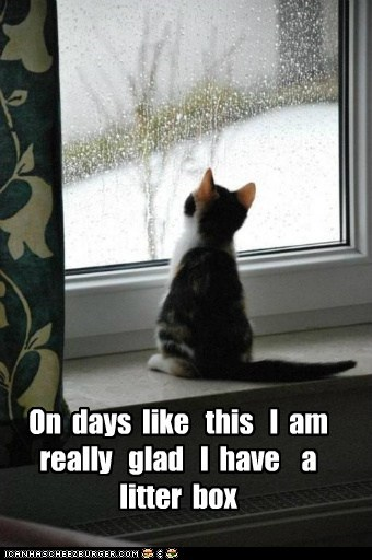 captions,Cats,house,inside,litter box,outside,poop,rain