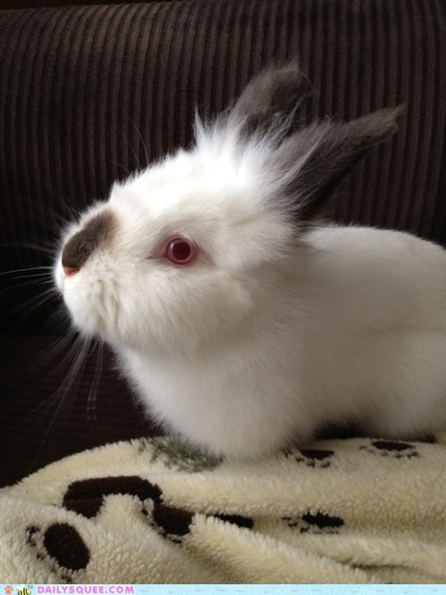 bunny pet rabbit reader squee red eyes - 6529018368