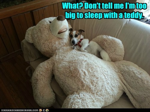 captions,cuddles,dogs,jack russell terrier,sleep,teddy bear