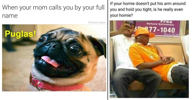 pass the time procrastination random memes funny memes boredom pupper dog memes doggo memes funny tumblr posts social media funny tweets funny twitter animal memes funny tumblr - 6529285