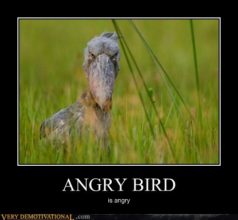 angry bird uh oh - 6529382656