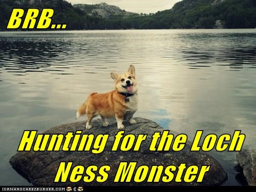 captions,corgi,dogs,hunting,lake,loch ness monster,scotland