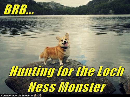 captions corgi hunting lake scotland - 6529456640