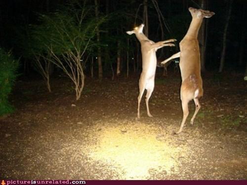 dear deer leader pun wtf - 6529493504