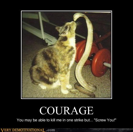 bad idea,cat,cobra,courage