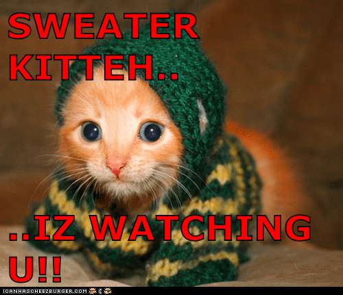 SWEATER KITTEH..  ..IZ WATCHING U!!
