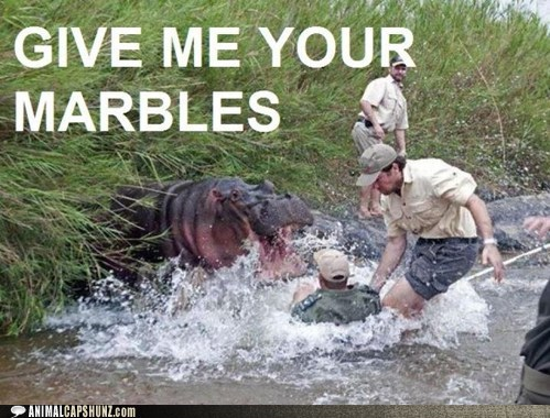 captions,hippo,hungry hungry hippos,IRL,marbles,out of nowhere,real life,surprise
