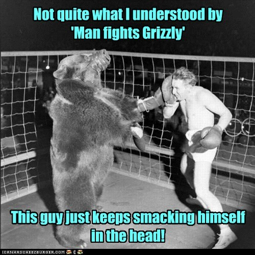 bear boxing fight man ring - 6530058752