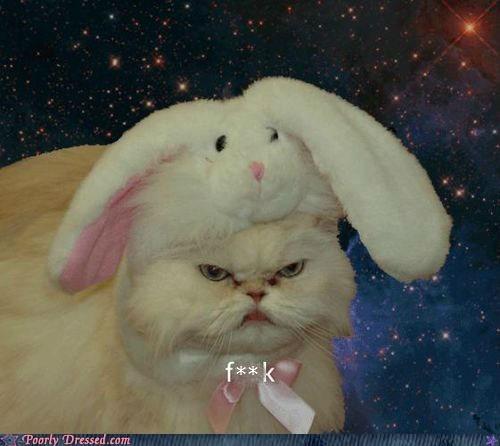 bunny ears,bunny hat,cat,hat