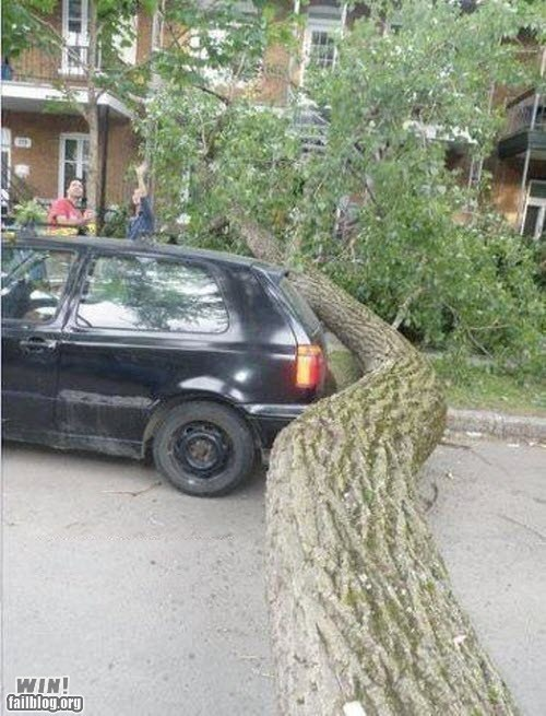 accident,close call,storm,tree