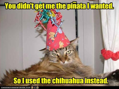 happy birthday to me You didn't get me the pinata I wanted. So I used the chihuahua instead. ~