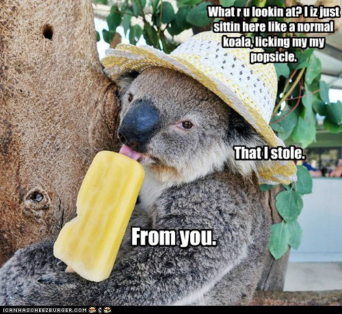 captions koala licking popsicle smug stole taunting yours - 6530537984