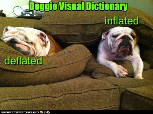 bulldog captions couch deflated dictionary dogs inflated sofa squish wrinkles