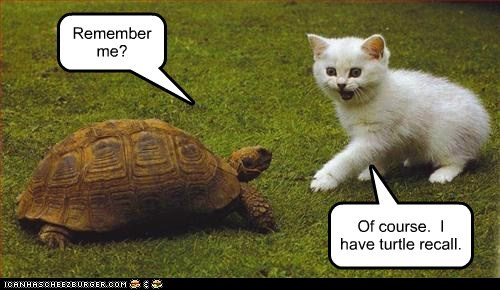 captions Cats Movie pun reference tortoise total recall turtle - 6531639808