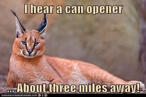 I hear a can opener ... About three miles away!