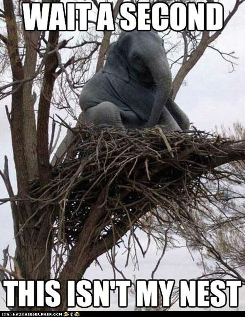birds elephants Memes nests this-isnt-my trees wtf - 6531886592