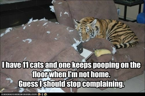 I have 11 cats and one keeps pooping on the floor when I'm not home. Guess I should stop complaining.