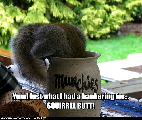 butt craving food jar munchies squirrel yum - 6531917568