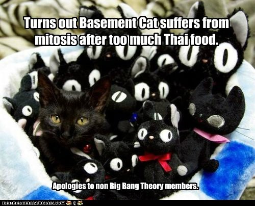 Turns out Basement Cat suffers from mitosis after too much Thai food. Apologies to non Big Bang Theory members.