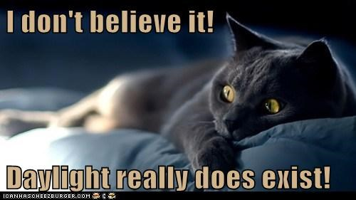 believe captions Cats dark daylight i-cant-believe-it morning