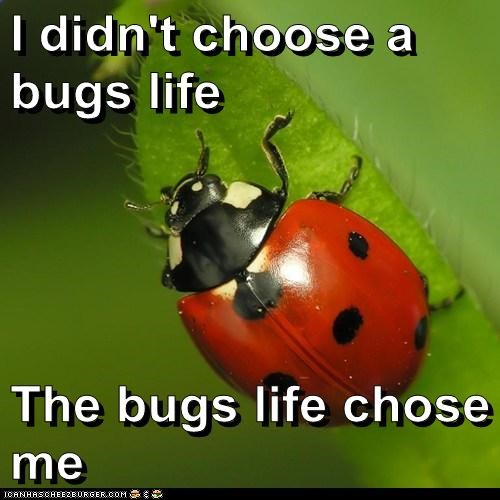 I didn't choose a bugs life The bugs life chose me