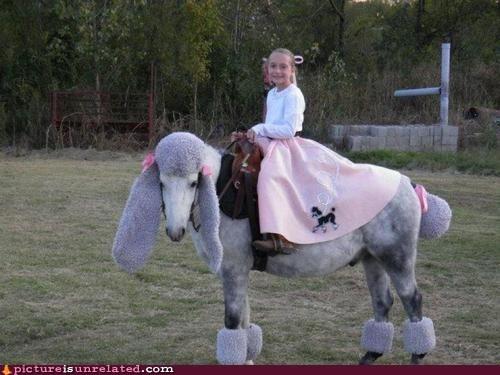 horse,poodle
