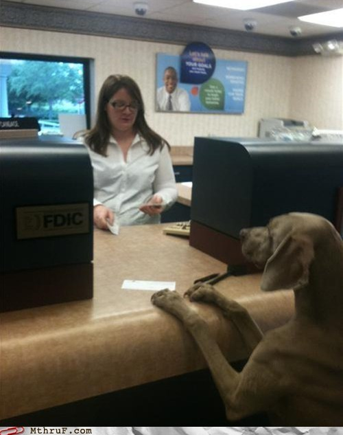 bank cashing checks dogs dog cashing a check - 6532521984