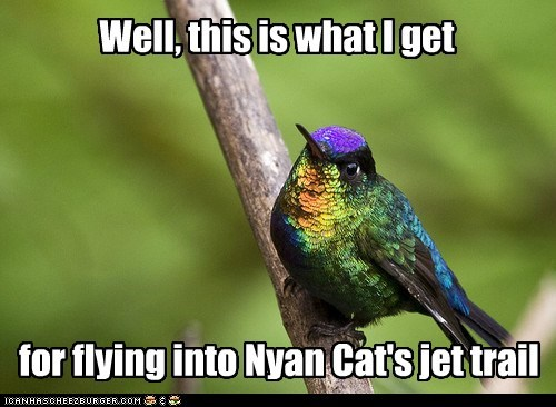 bird,flying,hummingbird,jet,not good,Nyan Cat,rainbow,taste the rainbow,trail