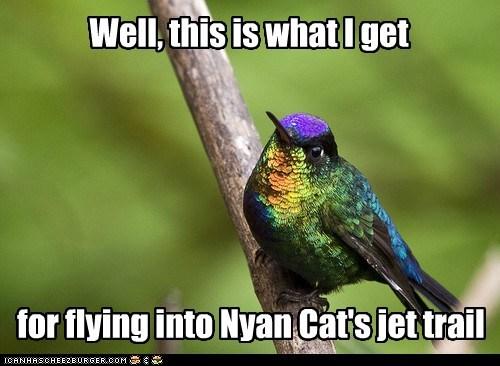 bird flying hummingbird jet not good Nyan Cat rainbow - 6532588800
