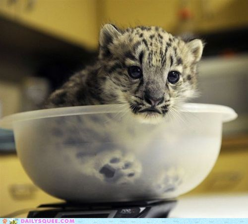 baby baking bowl cookies cub snow leopard squee spree - 6532674048