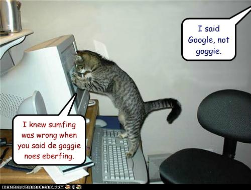 captions,Cats,computer,confused,goggie,google