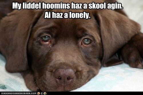 back to school,captions,dogs,i missed you,labrador,lonley,puppy,school
