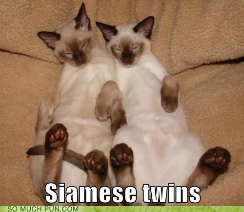 breed,cat,Cats,double meaning,literalism,siamese,siamese twins,twins