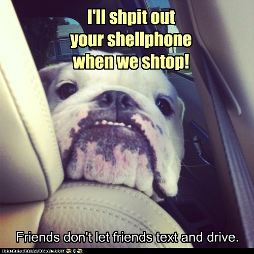 bulldog captions car cellphone dogs friends psa txting - 6533753600