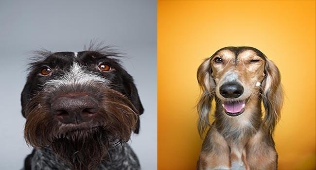 dogs photos photography art photo contest - 6533893