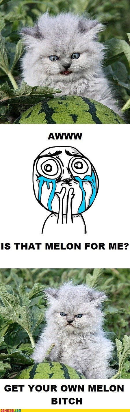 cute get your own melon - 6534001920