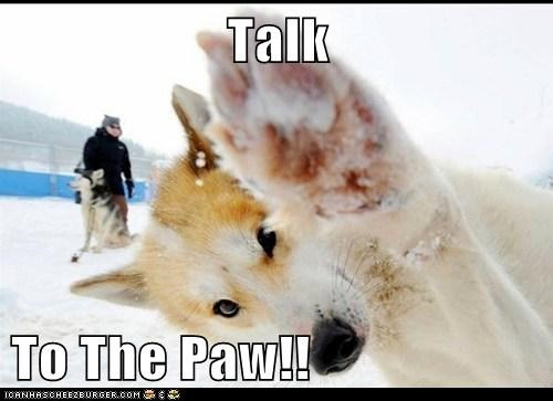 attitude,captions,dogs,husky,sled dog,snow,talk to the hand