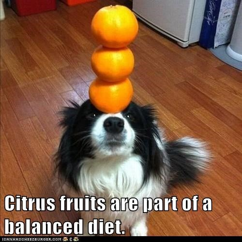 balanced diet,balancing,captions,dogs,fruit,fruit.,oranges,trick,what breed