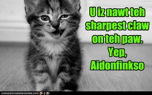 captions Cats dumb judgement saying sharpest tool in the shed