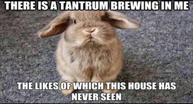 funny memes Memes animal memes animals - 6534405